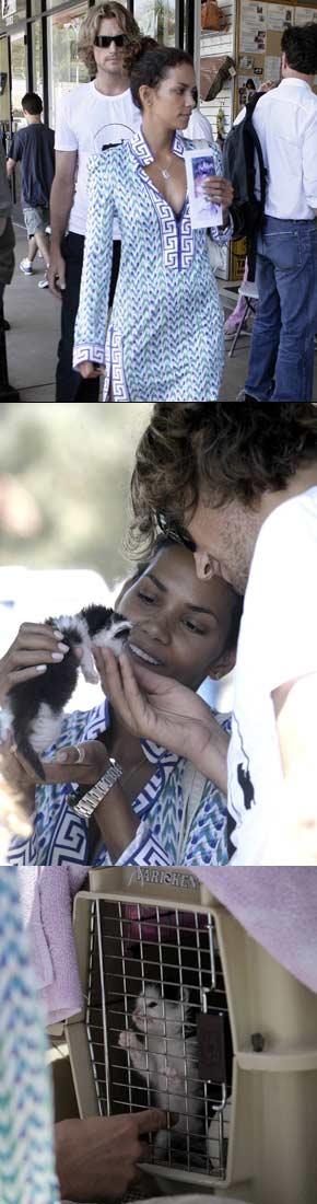 Halle Berry Adopts Kitten.jpg