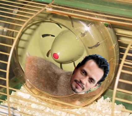 Marc Anthony is a Gerbil.JPG