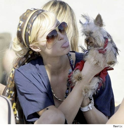 paris-hilton-teacup-dog-7-17-07.jpg