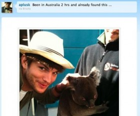 Ashton Kutcher Posing with Koala